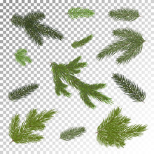 Close Up Of Fir Tree Branch Isolated .Vector Illustration. Eps 10.