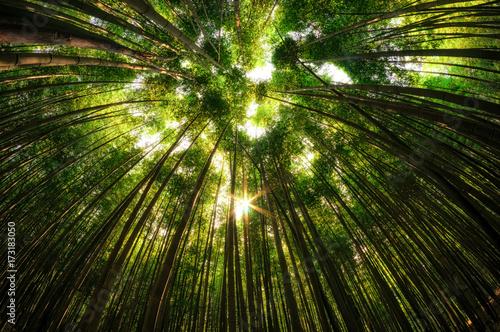 Printed kitchen splashbacks Khaki bamboo forest in damyang