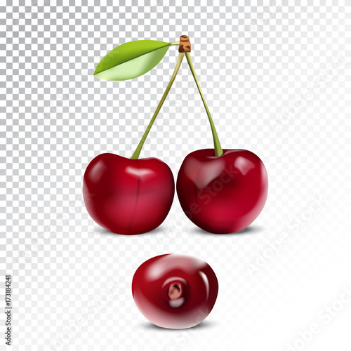 Obraz na plátně Vector realistic illustration of cherry.