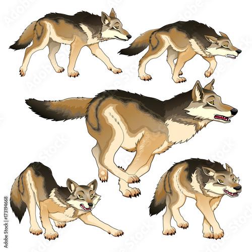 Staande foto Kinderkamer Group of isolated wolves