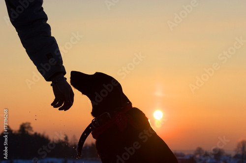 Aluminium Prints Red sihouette of a dog and man hand