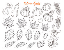 Autumn Objects Hand Drawn Collection Isolated On White Background.. Line Art Icons Of Leaves, Pumpkins And Berries. Thanksgiving Objects Outlines Set.
