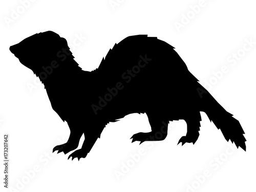 Fotografering  funny, playful ferret