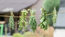 Bundles Of Flavoured Herbs Dry...