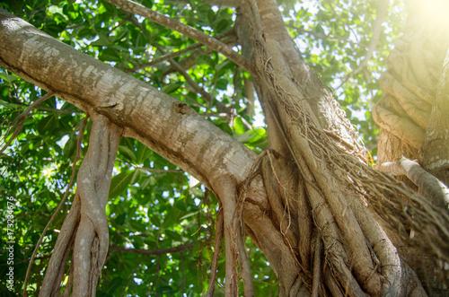 Fotografia, Obraz  Tropical tree