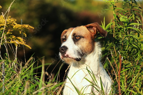 Photographie  Portrait of a cross breed dog between flowers
