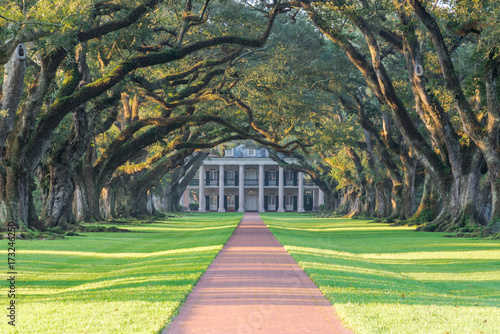 Double row of live oaks trees, Oak Alley Plantation in Louisiana, USA.