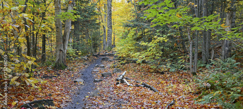 Autumn foliage with red, orange and yellow fall colors in A Northeast forest wit Tablou Canvas