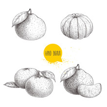 Hand Drawn Sketch Set Mandarins Whole And Peeled. Vintage Style Illustration Of Tangerine With Leafs An Slices. Eco Food Vector Artwork Isolated On White Background.