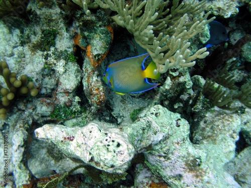 Fotografie, Obraz  peixe azul