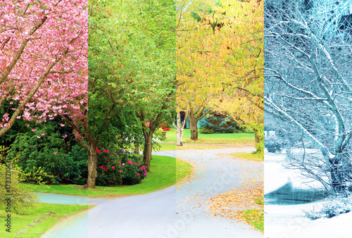 A composite collage of four images of one street lined with cherry trees photographed in all four seasons from the exact same location. Branches in the trees line up perfectly.