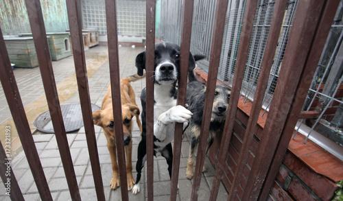 cztery różne psy za kratami schroniska