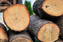 Big Round Cutted Firewood Pieces