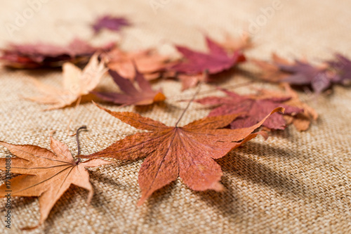 Dry maple leaves Wallpaper Mural