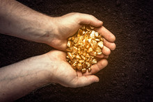 Gold Nuggets The Hands Of The ...