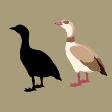 Egyptian Goose Vector Illustra...