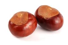 Chestnut Isolated On White Bac...