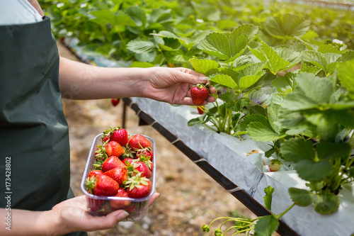 Boxes of strawberries in farmer market Canvas Print