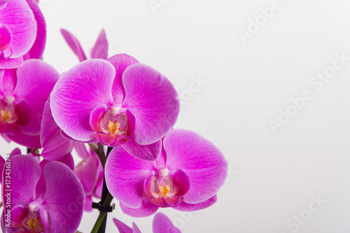 Foto op Canvas Orchidee Orchideen isoliert auf weiss