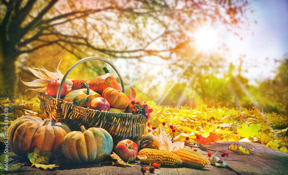 Fototapety, obrazy: Thanksgiving background with pumpkins