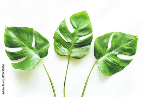 Prawdziwi tropikalni liście tła na bielu. Botaniczna natura concept.flat kłaść