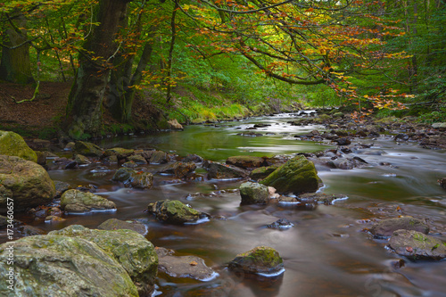 Aluminium Prints Forest river Autumn Stream Long Exposure, Eifel