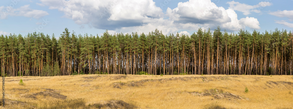 Fototapety, obrazy: Extra large wide panoramic view of pine forest and cloudy sky on the background