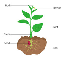 Parts Of Plant Diagram