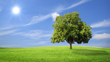 Green Grass And Tree With Clou...