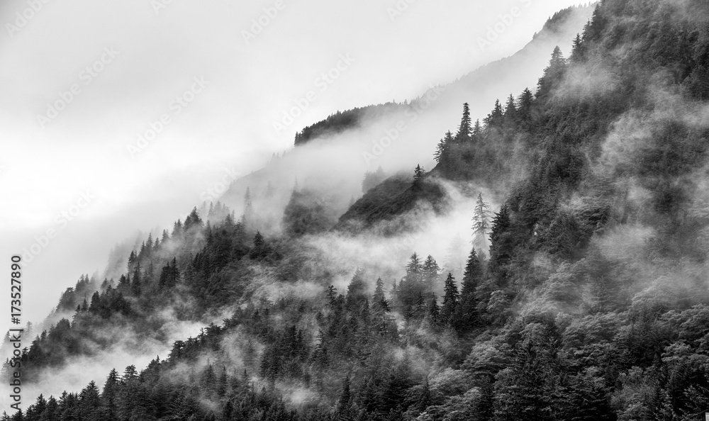 Fototapety, obrazy: Mountains top with pine tree with fog in black and white