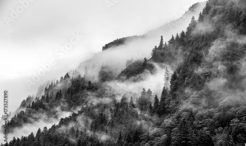 Cuadros en Lienzo Mountains top with pine tree with fog in black and white