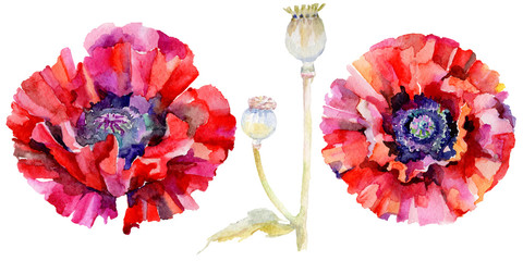 Panel Szklany Wildflower poppy flower in a watercolor style isolated. Full name of the plant: red poppy. Aquarelle wild flower for background, texture, wrapper pattern, frame or border.
