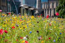 Wild Flowers Growing In City