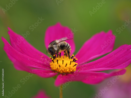 Plakat Pszczoły i kosmos