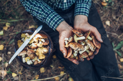 Man holds an handful of oily mushrooms Tapéta, Fotótapéta