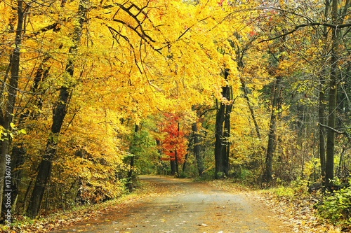 Canvas Prints Autumn Autumn forest nature background. Fall landscape with a road in a forest with bright yellow trees. Midwest USA, Wisconsin.