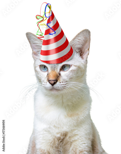 Funny Party Animal Concept Of A Cat Wearing Birthday Hat Isolated On White