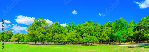 森林と広場 奈良公園