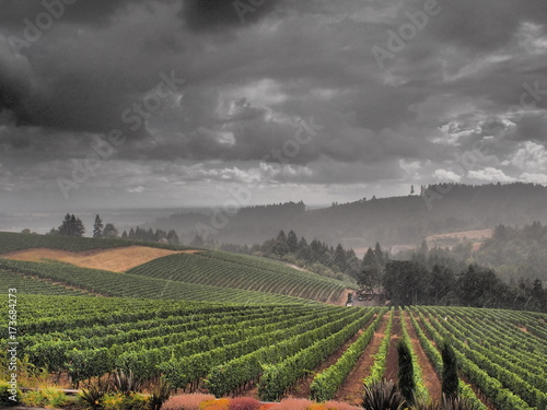 Papiers peints Vignoble Wine