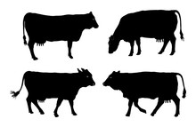 Group Of Cow Vector Silhouette Illustration.