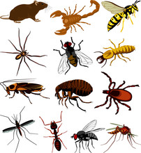 Pest Icon - Insects, Scorpion,...