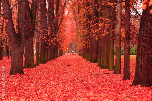 Foto auf Leinwand Rot path in the autumn park