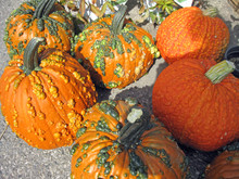 Warty Pumpkins For Fall, Thank...