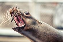 Feeding Fish To A Sea Lion