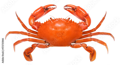 Crab isolated on white background. Serrated mud crab. Wallpaper Mural