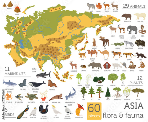 Big Map Of Asia.Flat Asian Flora And Fauna Map Constructor Elements Animals Birds