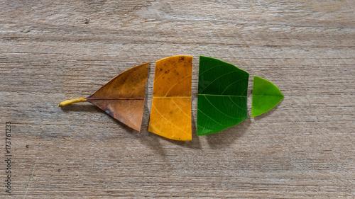 Fotografía  Autumn leaves