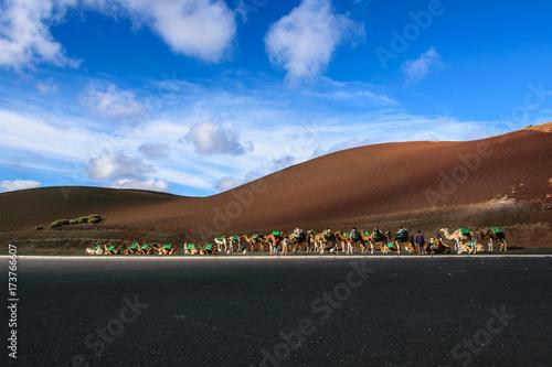 Deurstickers Canarische Eilanden Kamelsafari