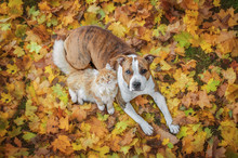 Cat And Dog Lying On The Leaves In Autumn