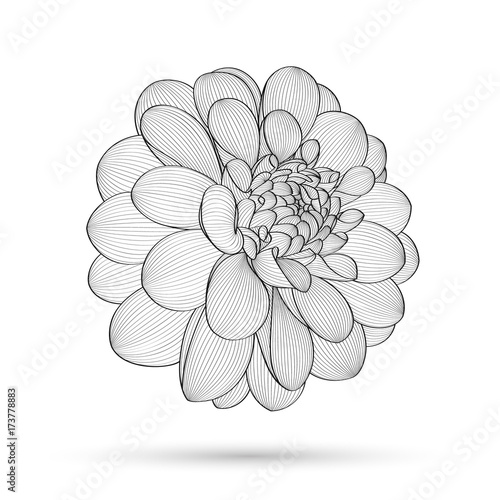 Fototapety, obrazy: Abstract floral background. Vector flower dahlia. Element for design.